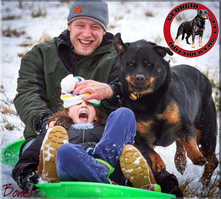 sledding-puppy-guarantee-georgia-rottweilers